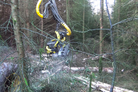 PTS use specialist equipment to extract timber with minimal damage to woodland.