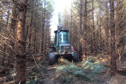 PTS offer a complete range of woodland management services.