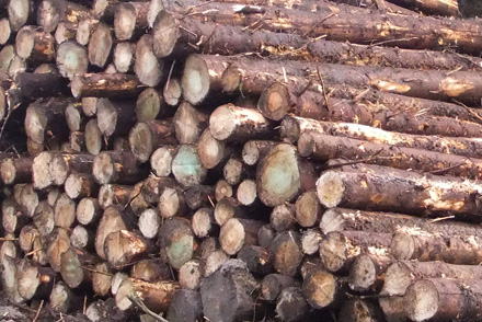 If your wood is ready for first thinning, call PTS to discuss how we can help you.